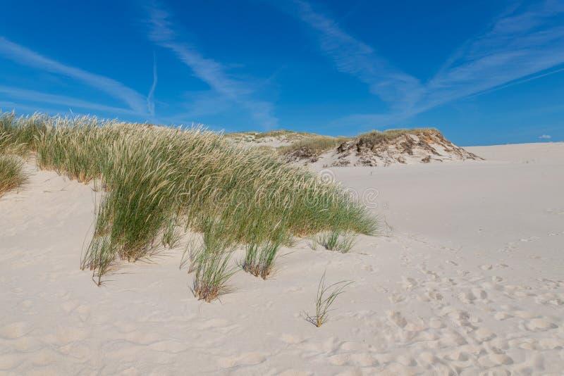 Leba Pomeranian Voivodeship/Polen - Juli 14, 2019: Stora sanddyn i Centraleuropa Som spottas mellan Östersjön och arkivfoton