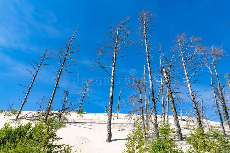 Leba, Woiwodschaft Pommern/Polen - 14. Juli 2019: Große Sanddünen in Mitteleuropa Ein Spucken zwischen der Ostsee und stockfoto