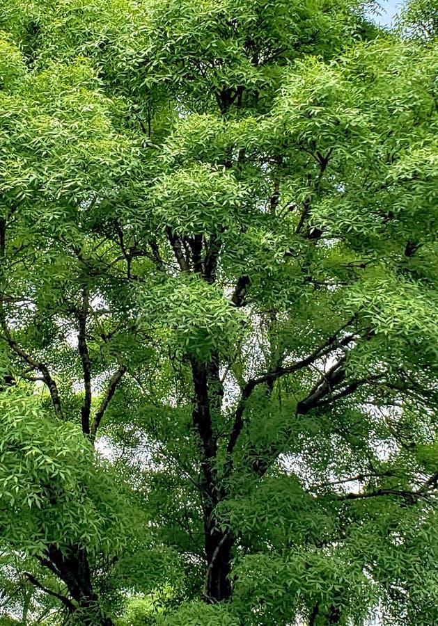 Leben des Grüns stockbilder
