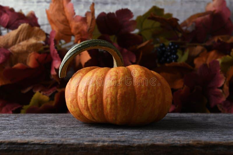 Leben des Herbstkürbises noch stockbilder