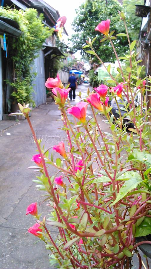Leben in einem kleinen Weg in Bangkok stockfoto