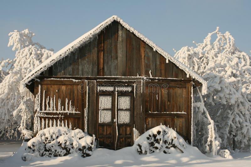 Leben im Schnee lizenzfreie stockfotos