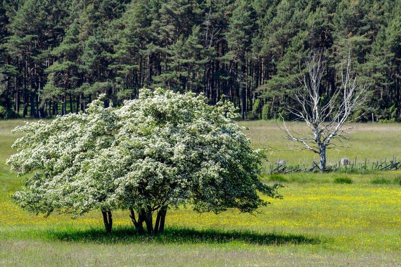 Leben oder Tod: ein emporkommender und verwelkender Baum lizenzfreie stockfotografie