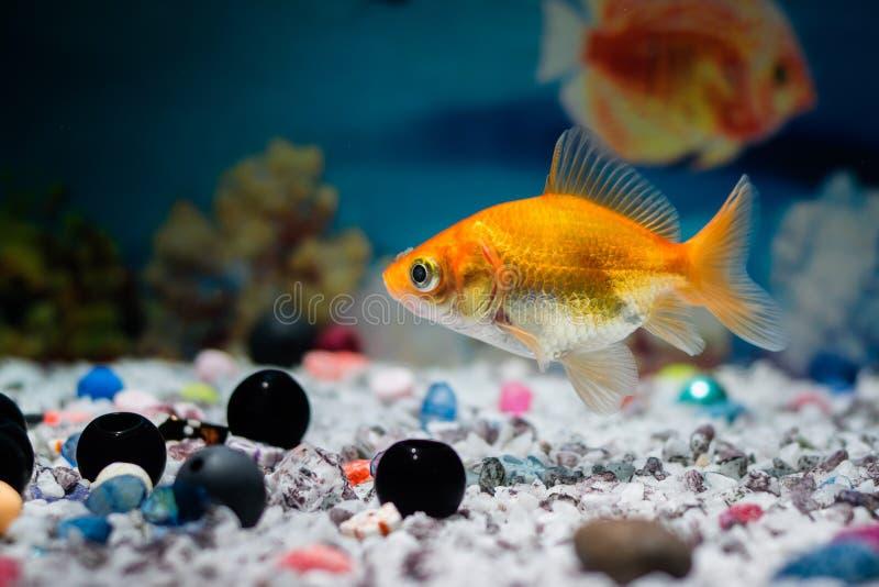 Leben unter Wasser lizenzfreies stockfoto