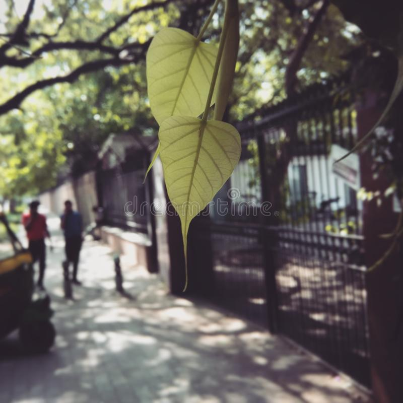 Leben von Blättern lizenzfreie stockfotos