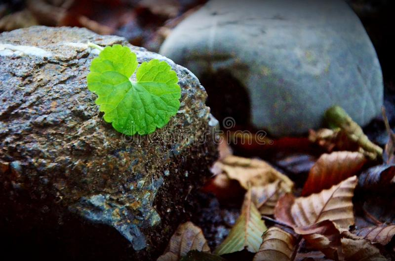 Leben zwischen Steinen imagen de archivo libre de regalías