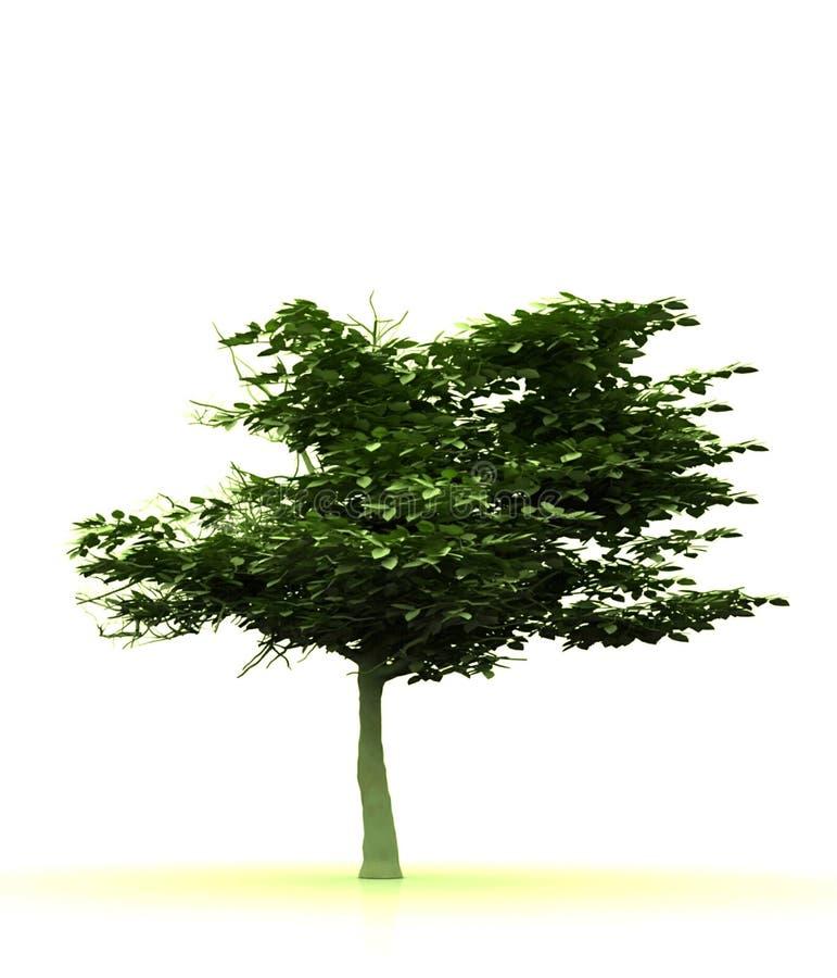 Lebenbaum lizenzfreie abbildung