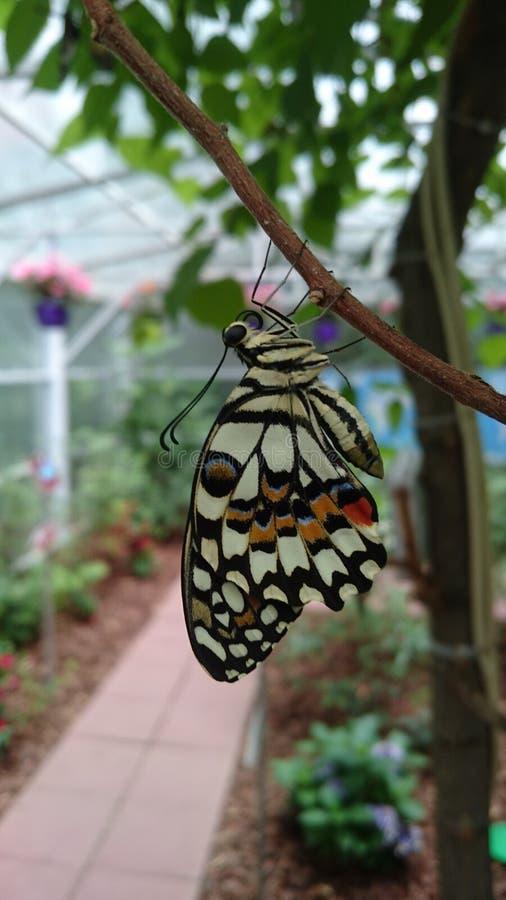 Lebende exotische Schmetterlingsarten - farbenfrohe Insekten in ihrem natürlichen Lebensraum stockfoto