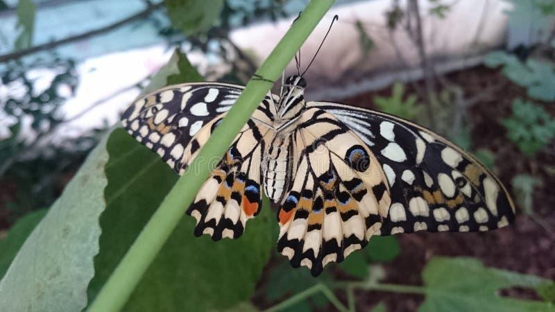 Lebende exotische Schmetterlingsarten - farbenfrohe Insekten in ihrem natürlichen Lebensraum stockbilder
