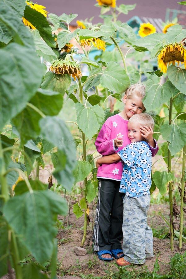 Lebende glückliche Kinder Bruder und Schwester in den Dickichten der Sonnenblume im Hinterhof des Bauernhofes lizenzfreies stockbild