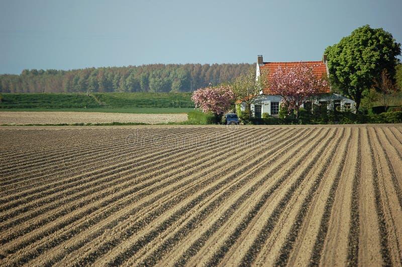 Lebende Kartoffel stellt Frühling auf stockbilder