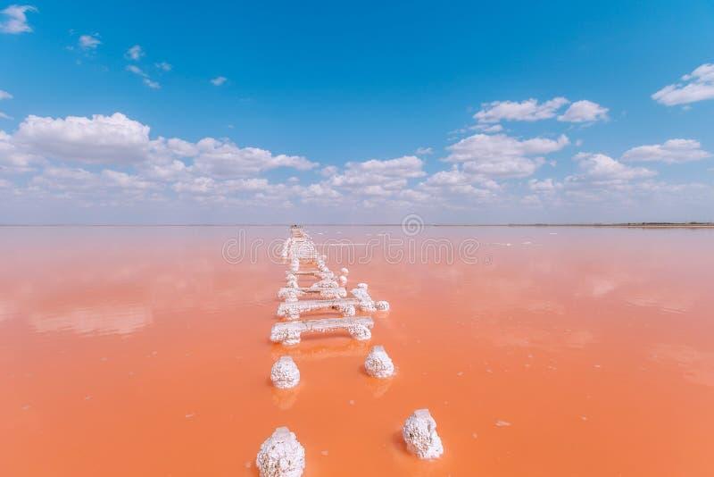 Lebende korallenrote Seetreppe Farbe des Jahres 2019 stockfoto