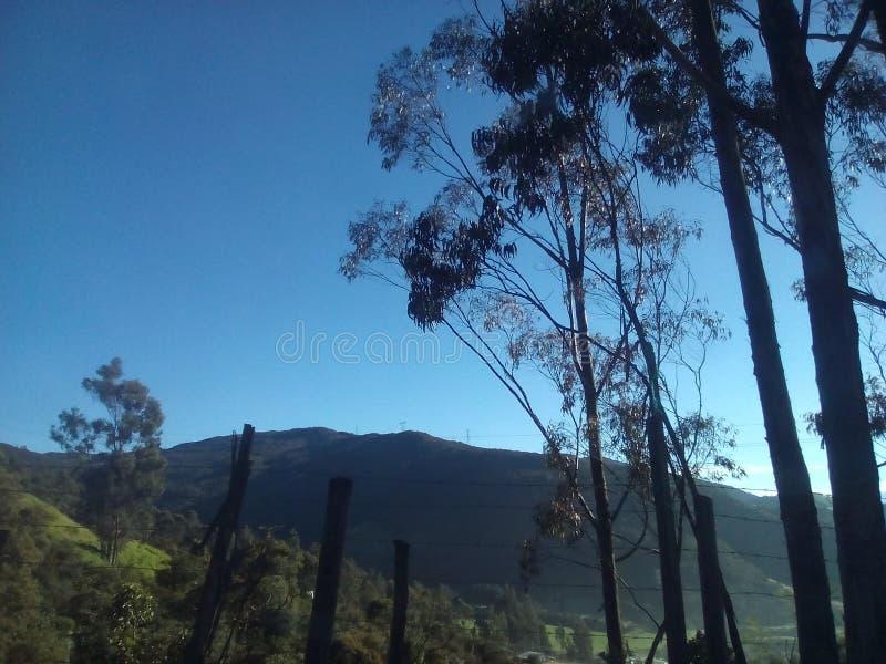 Lebendige Bäume, die den Berg betrachten stockbild