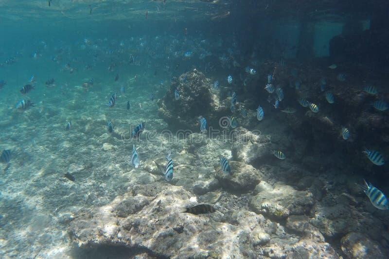 Lebens- Marinefische stockbild