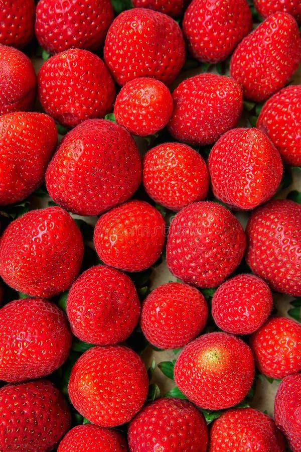 Lebensmittel-Muster-vermarkten reife organische Sommer-Erdbeeren in der Pappschachtel an Landwirt ` s vibrierende Farben stockfotografie