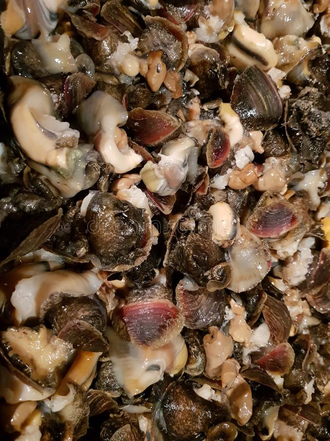 Lebensmittel rapana Meer lizenzfreies stockfoto