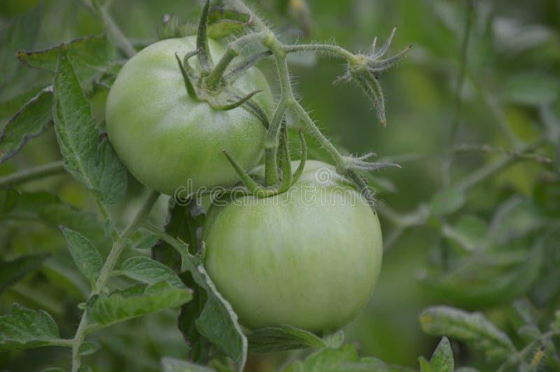 Lebensmittellebensmittellebensmittel lizenzfreies stockbild