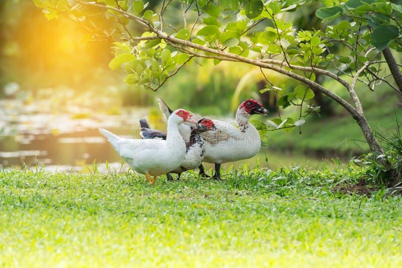 Lebensraum der Ente stockfotografie