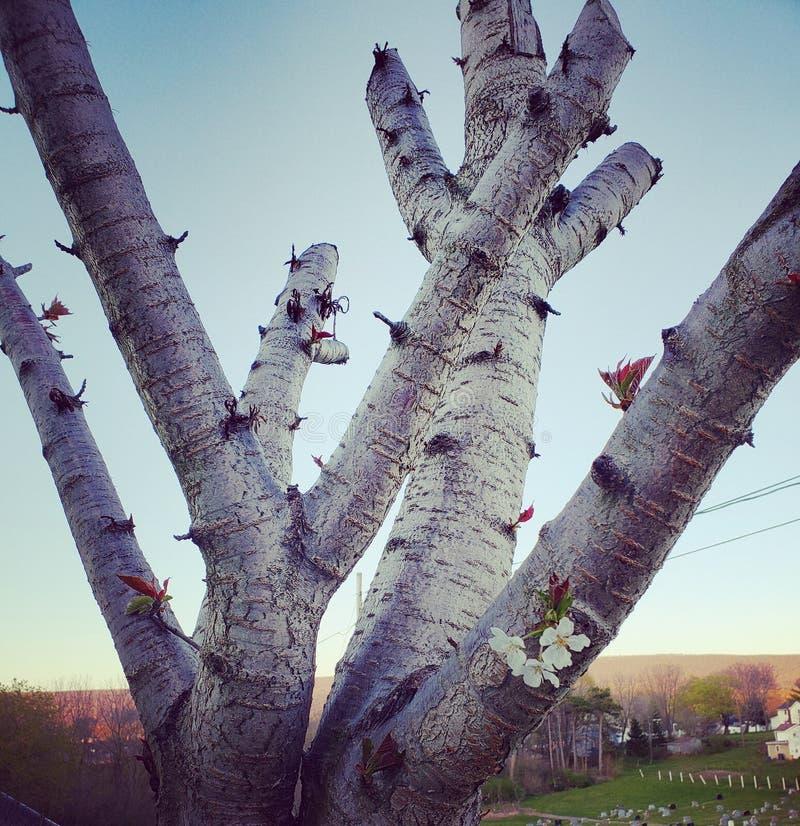 Lebenszeichen für nah getrimmten Baum lizenzfreie stockfotografie
