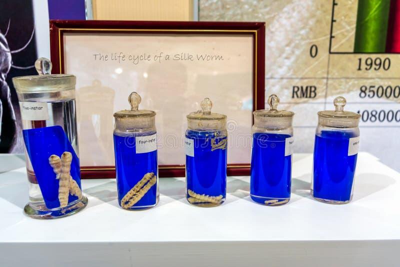 Lebenszyklus der Seidenraupe und der Larve, konserviert in den Gläsern, um jeden Augenblick oder Zyklus anzuzeigen stockfoto