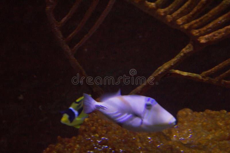 Lebhaftes buntes Wasserleben im dunklen Anzeigenaquarium stockbilder