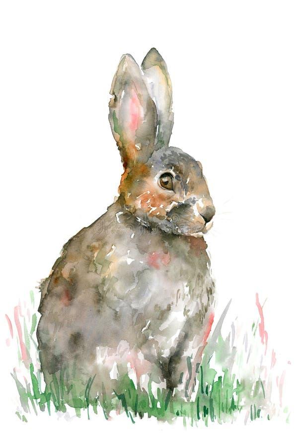 Lebre cinzenta da aquarela que senta-se na grama verde ilustração do vetor
