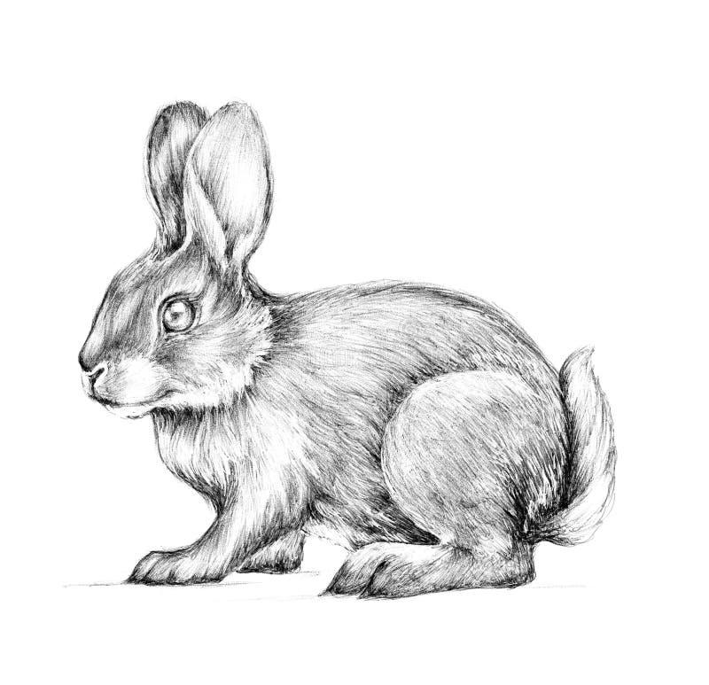 Lebre, coelho, esboço dos gráficos ilustração do vetor