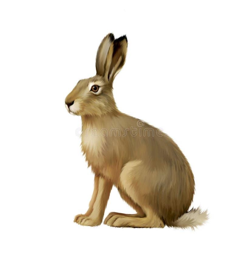 Lebre de assento, coelhinho da Páscoa bonito ilustração stock