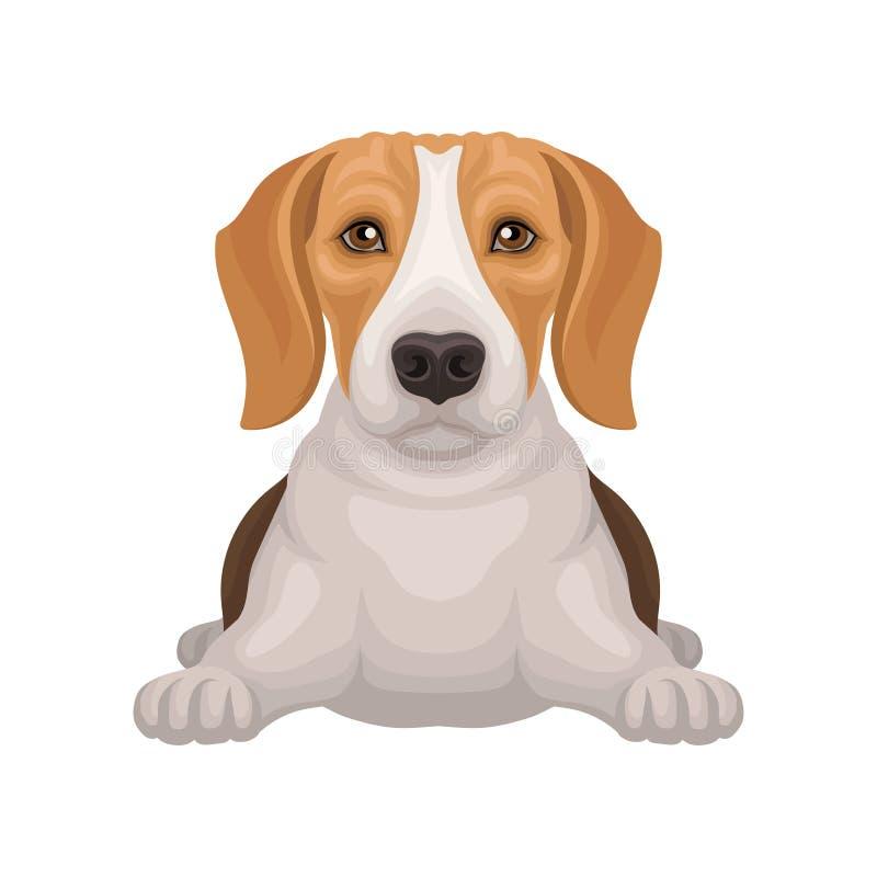 Lebreiro bonito com encontro brilhante dos olhos isolado no fundo branco Cão de caça pequeno com focinho adorável Vetor liso ilustração stock