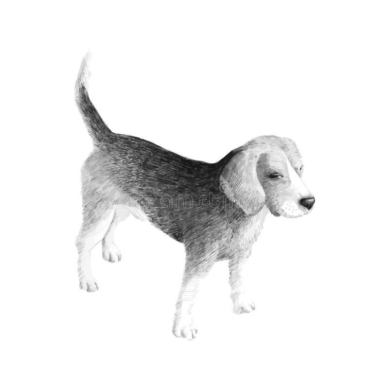 Lebreiro da raça do cão pequeno, desenho preto e branco dos gráficos de vetor do esboço ilustração royalty free