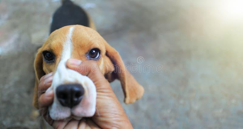 Lebreiro dog&#x27 da posse da mão; boca de s para manter a calma quando ele casca imagens de stock royalty free
