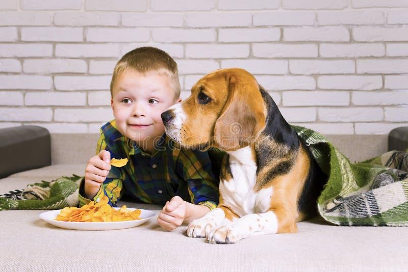 Lebreiro engraçado do menino e do cão que come microplaquetas imagens de stock royalty free