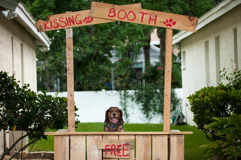 Lebreiro que senta-se em uma cabine de beijo imagem de stock royalty free