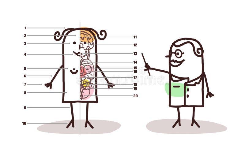 Lección femenina de la anatomía de la historieta ilustración del vector