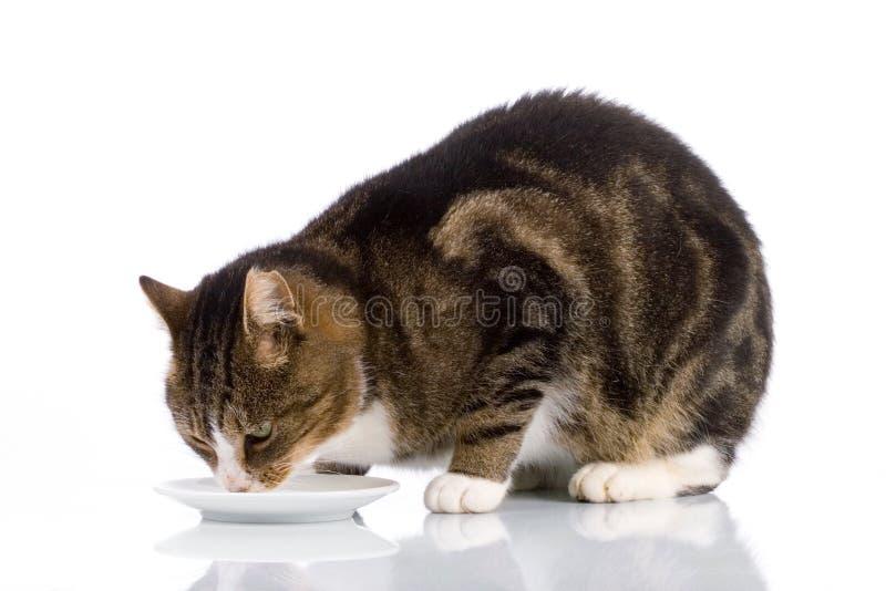 Leche de consumo 2 del gato fotografía de archivo libre de regalías