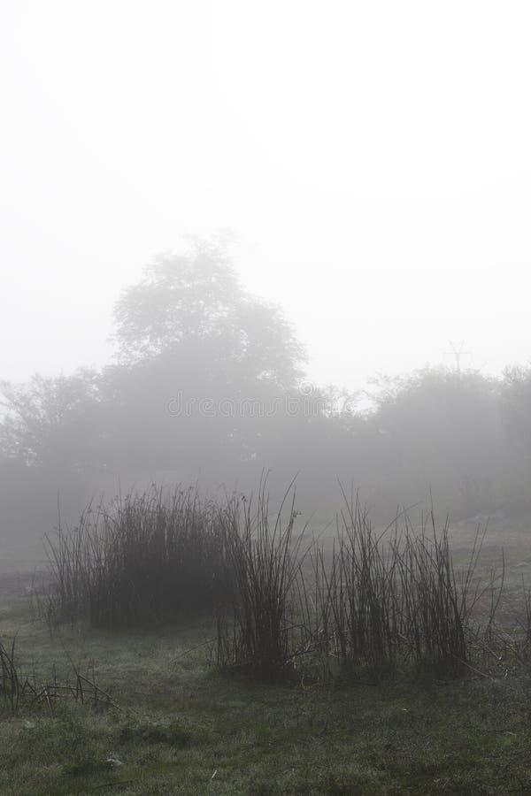 Leche en la niebla matutina imagenes de archivo