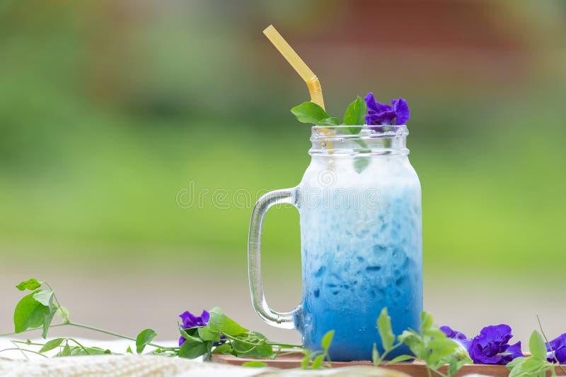 Leche helada o mariposa helada Pea Latte del guisante azul con la leche sana imagen de archivo libre de regalías