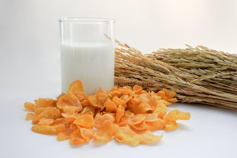 Leche y copos de maíz, un par de desayuno fácil fotografía de archivo libre de regalías