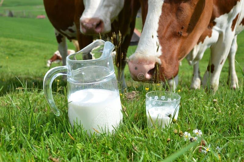 Leche y vacas imagen de archivo