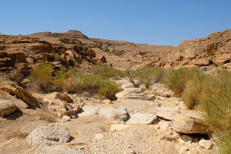 Lecho de un río seco seco en desierto del Néguev fotos de archivo libres de regalías