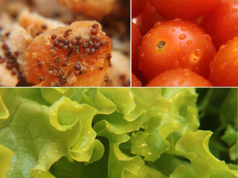 Lechuga del tomate y collage del primer del pollo fotografía de archivo