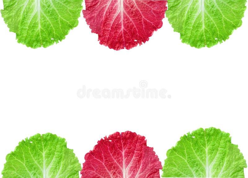 Lechuga fresca/una hoja aislada en el fondo blanco imagenes de archivo
