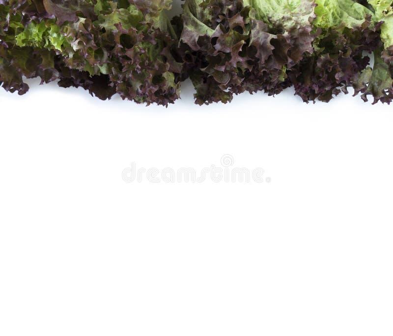 Lechuga roja en la frontera de la imagen con el espacio de la copia para el texto foto de archivo