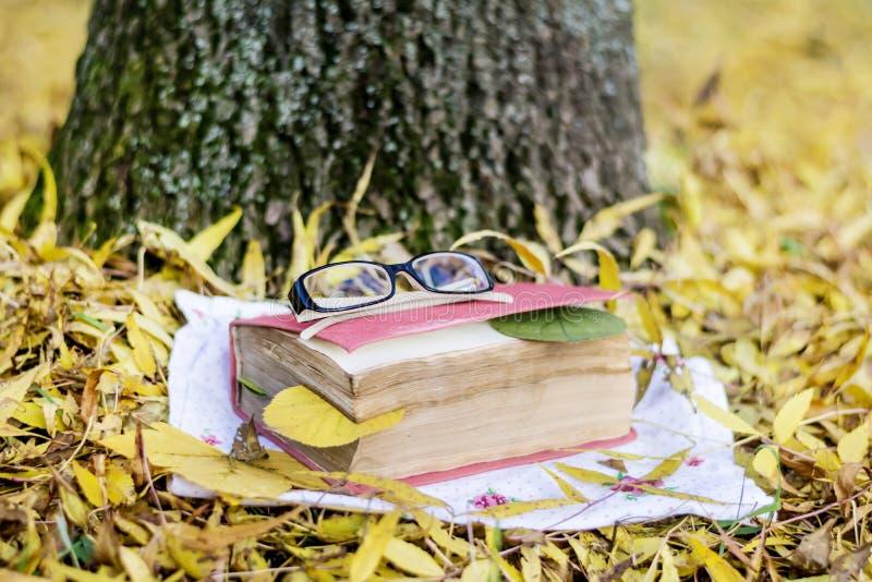 Lectura en el parque del otoño foto de archivo