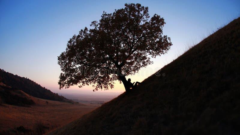 Lecture de silhouette contre l'arbre au coucher du soleil photo stock