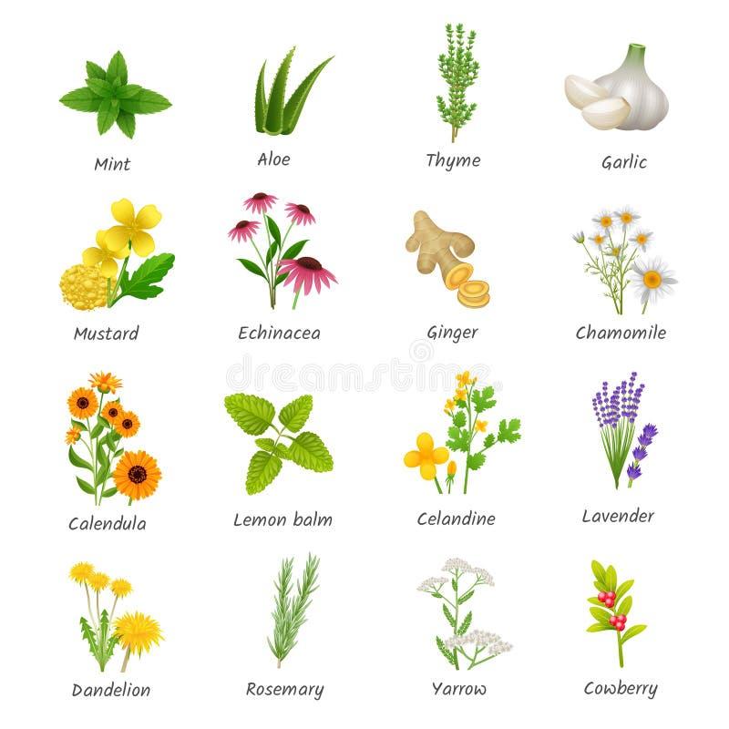 Leczniczych ziele rośliien Płaskie ikony Ustawiać ilustracji