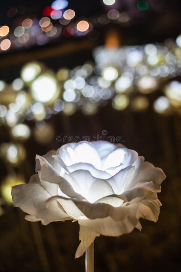 LED光罗斯有bokeh背景 免版税库存图片