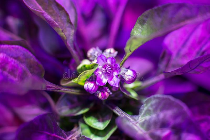 Led自温室增长轻为生长耕种植物 库存图片