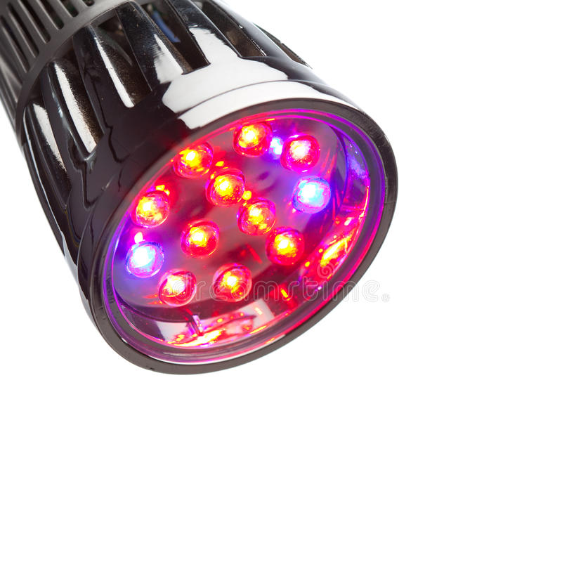 LED lamp for plant growing royalty free stock images