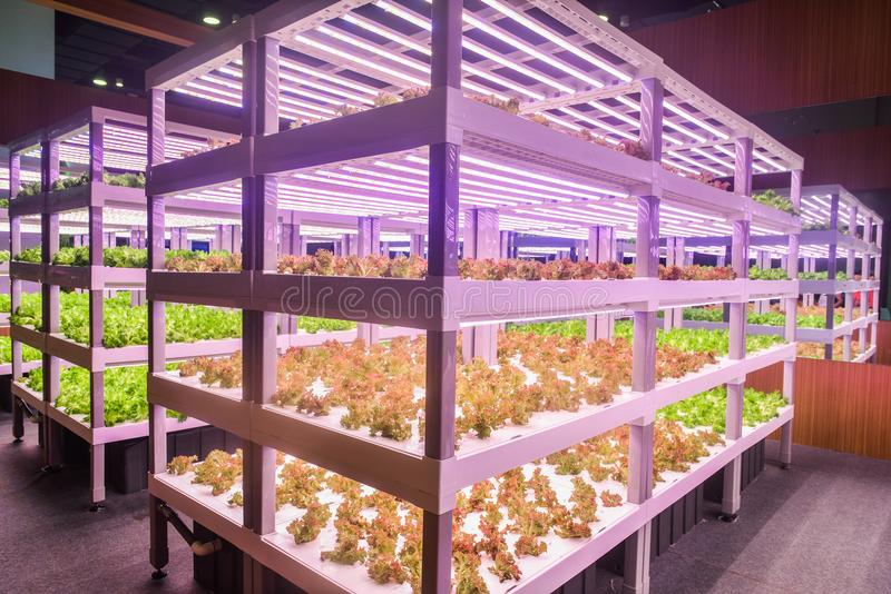 Led plant growth lamp used in Modern Vertical agriculture royalty free stock photo